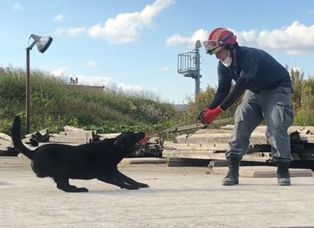 ③災害救助犬の捜索訓練を動画で紹介!【グレートバディGreat Buddy】コラボ